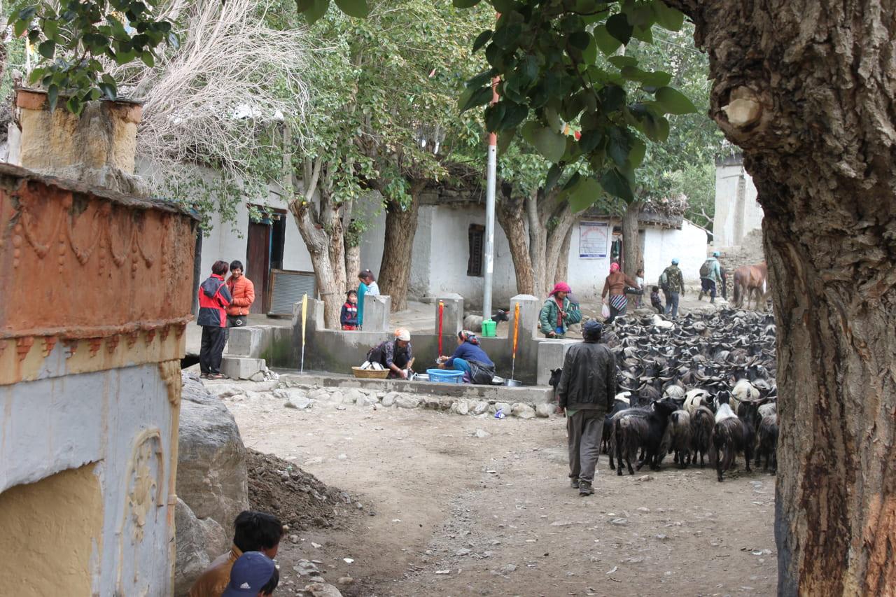 朝、家畜が行き交うガミの村