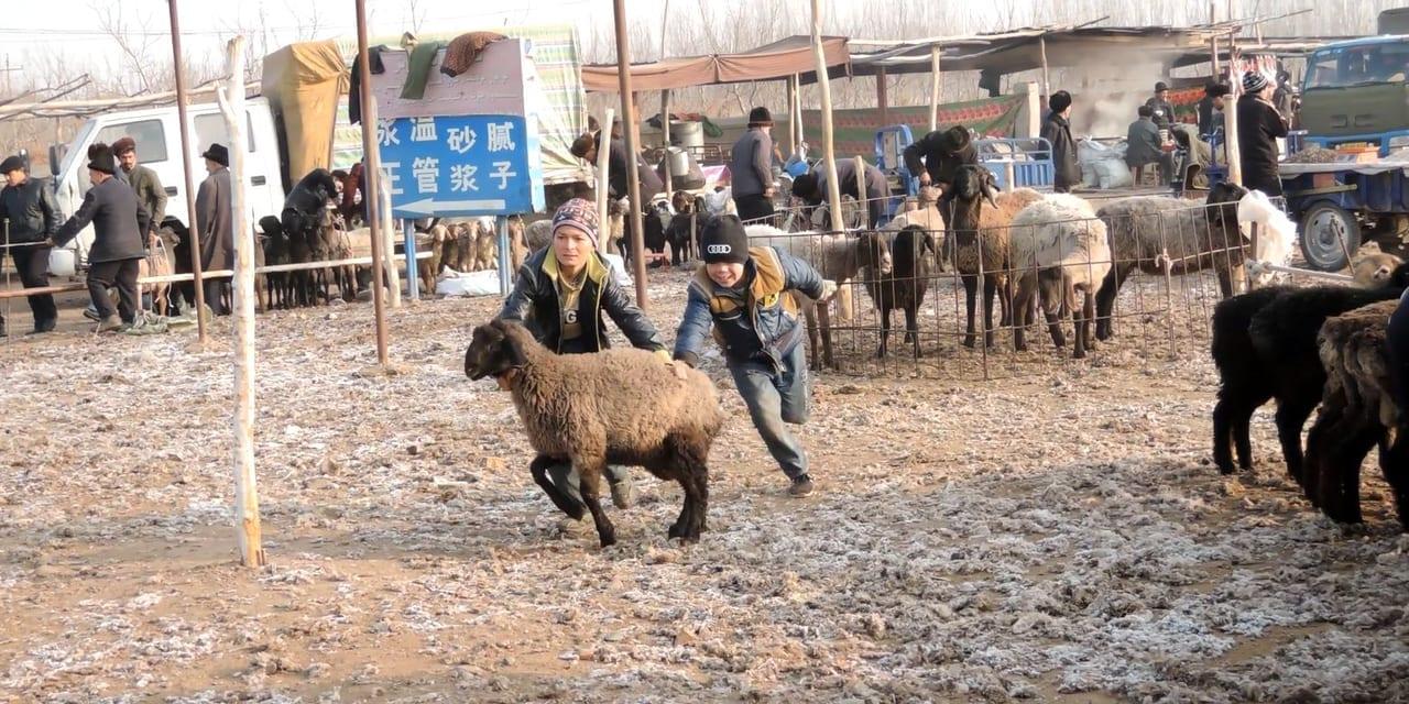 家畜市で羊を捕まえようと奮闘するウイグル少年たち(カシュガル)
