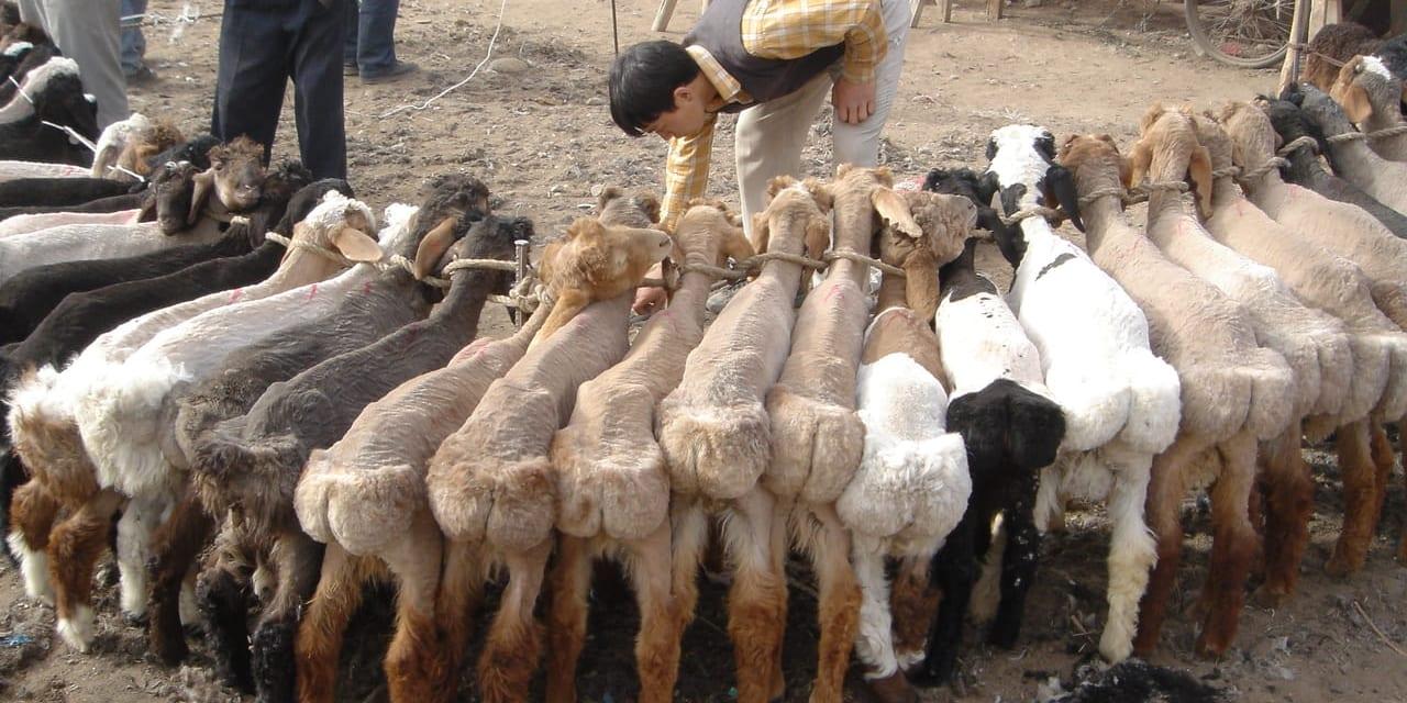 カシュガルの家畜市