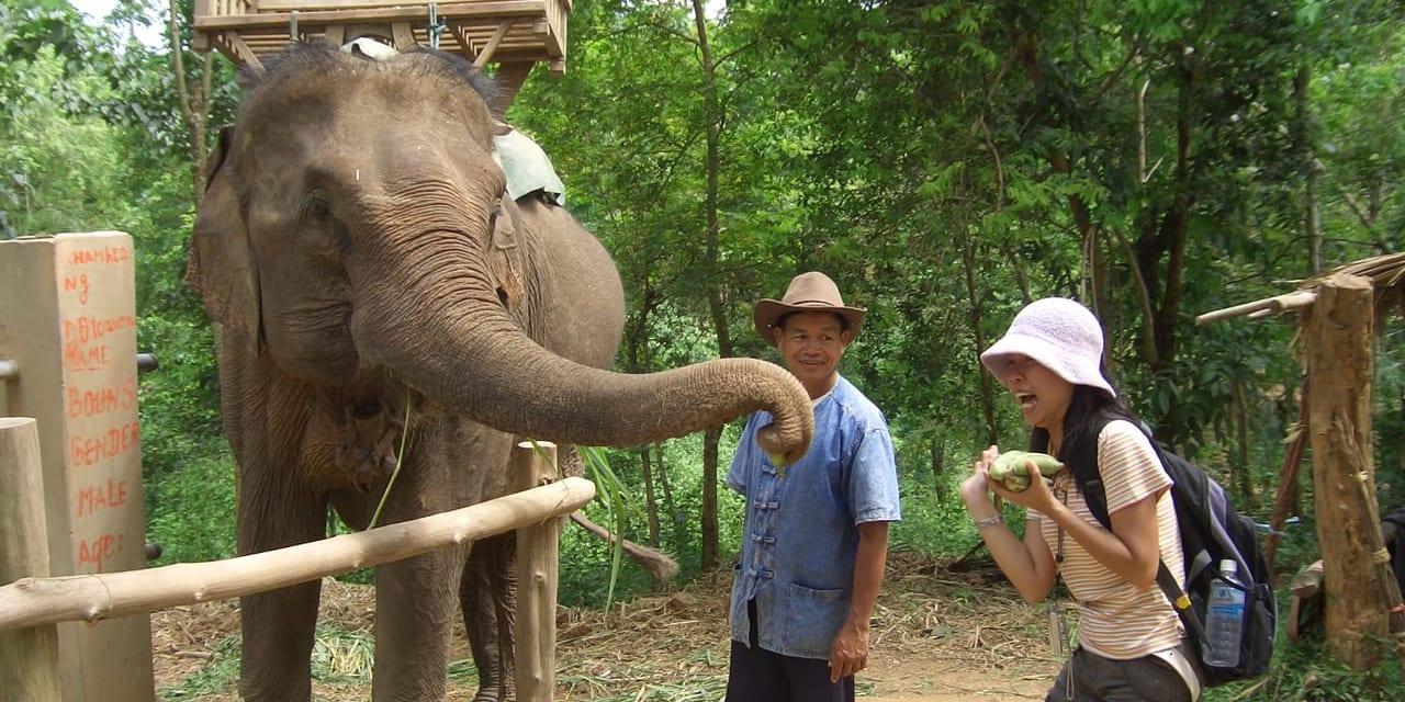 餌やりも象使いの大切な仕事。1日に約150~250㎏も食べます(ルアンプラバーン)