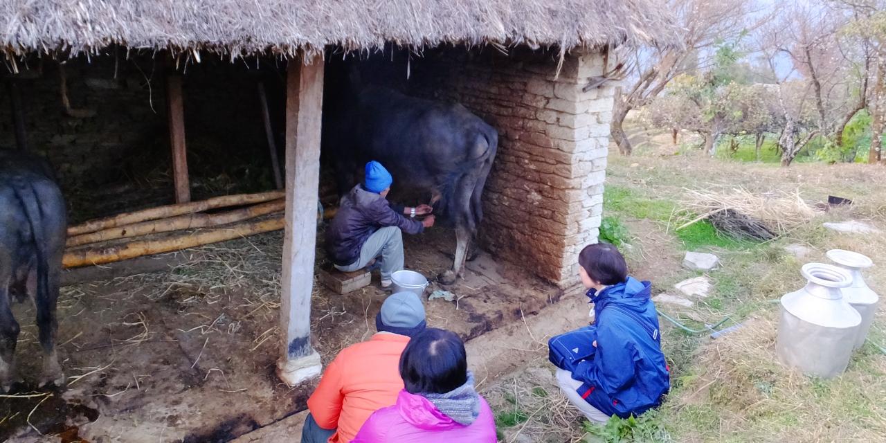 乳製品の恵みはもちろん、バイオガス主原料の堆肥も提供してくれる家畜を飼育