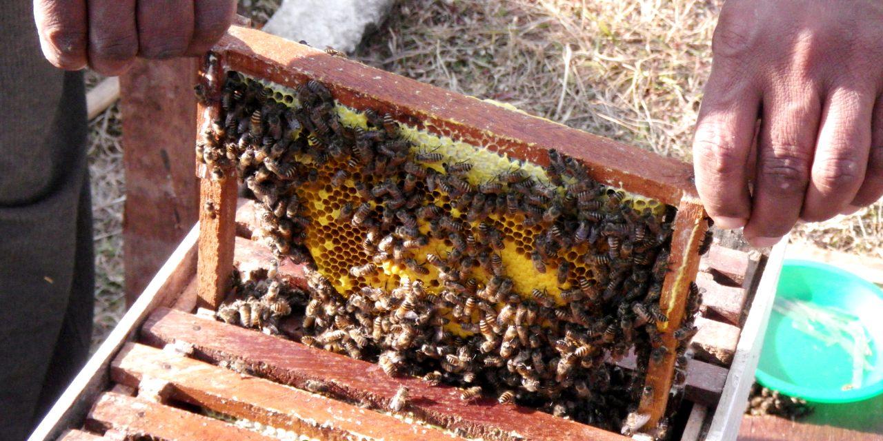 蜜蝋や蜂蜜を提供する「はなのいえ」のミツバチ