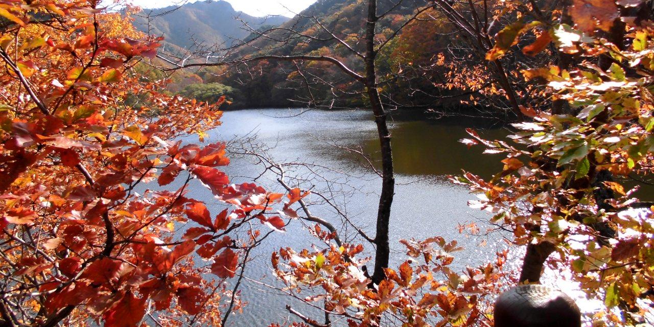 注山池渓谷