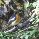 jp-bird-125