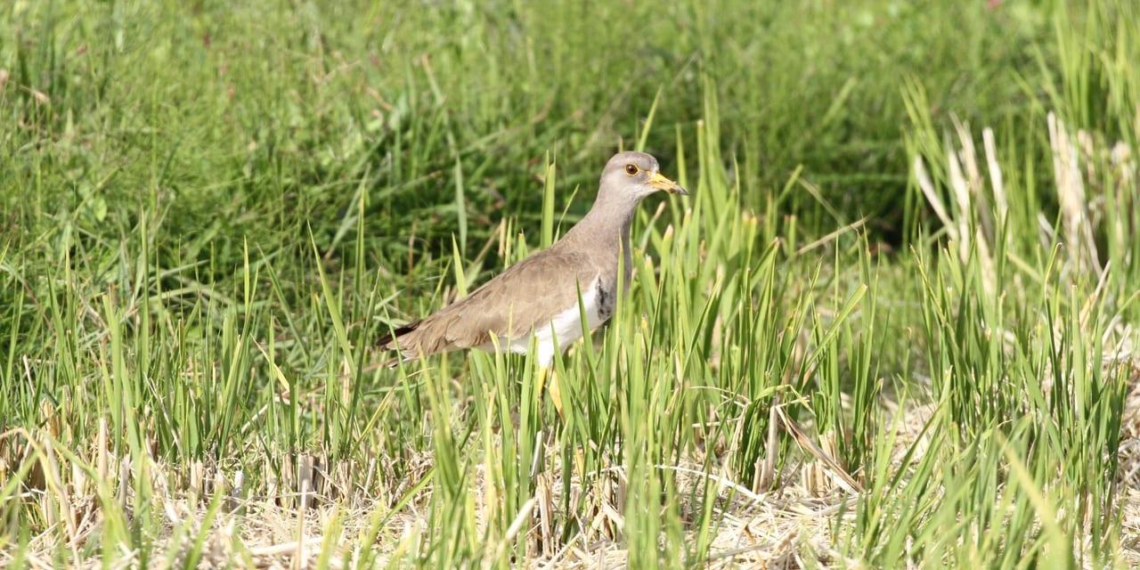 jp-bird-134