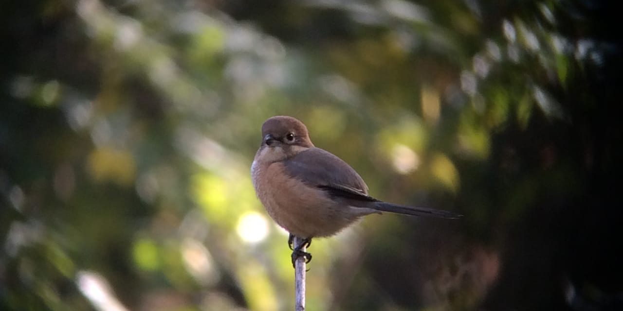 jp-bird-135