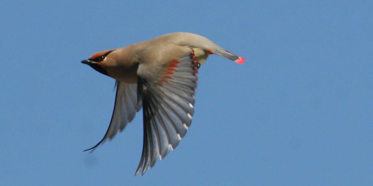 jp-bird-142