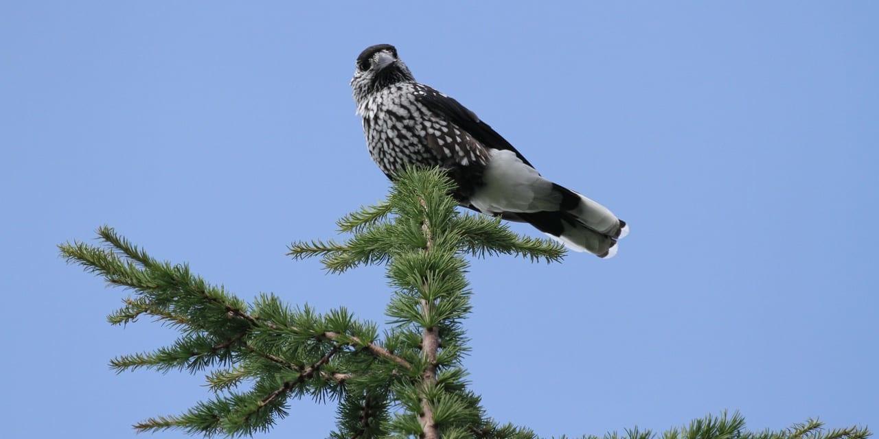 jp-bird-169
