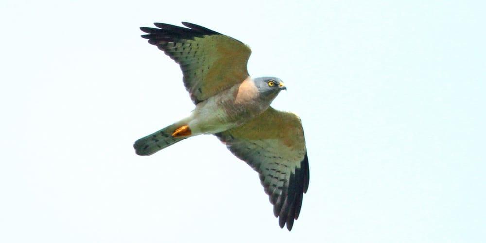 jp-bird-207