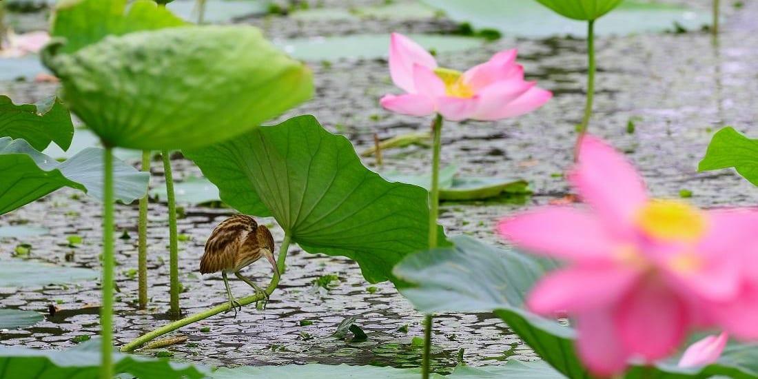jp-bird-208