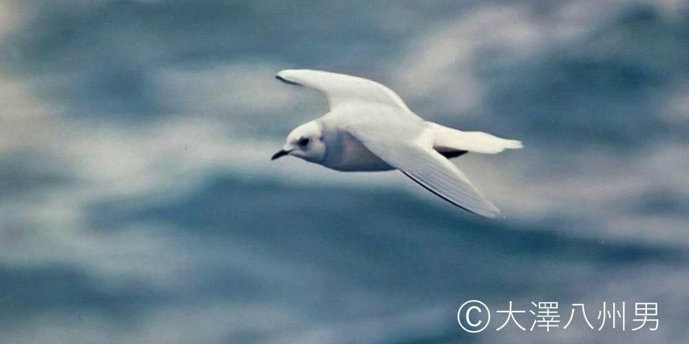 jp-bird-210