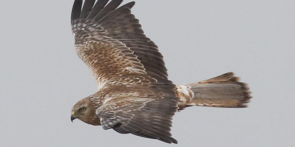 jp-bird-211