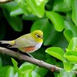 kr-bird-09