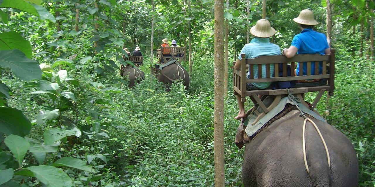 ラオスは象の国、ラオスの森で象乗りは貴重な体験になることでしょう(ルアンプラバーン)