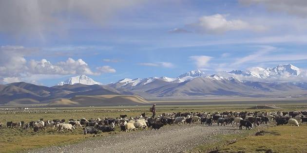 チベット高原とモンゴル大草原 遊牧民としていきる