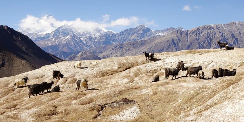 岩塩が露出する乾燥した大地