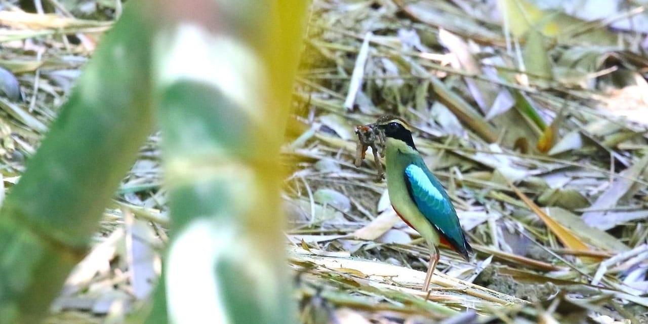 tw-bird-19