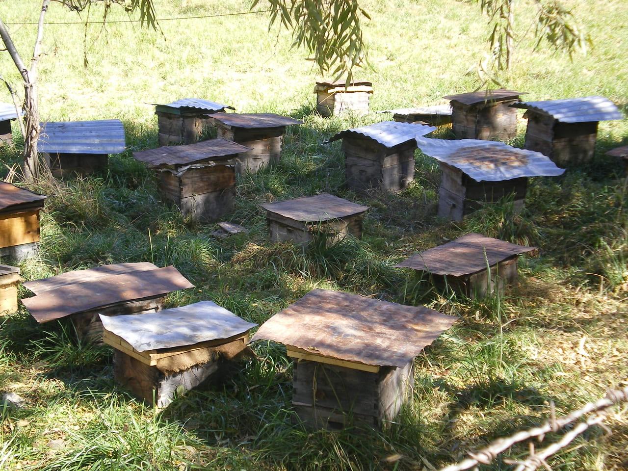 ブータン(ブムタン地方)の養蜂