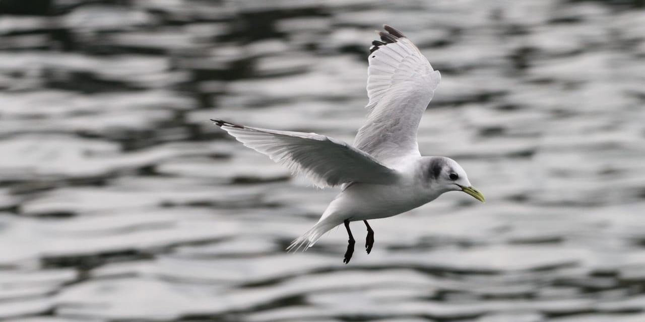 jp-bird-094