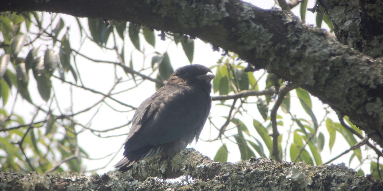 jp-bird-107