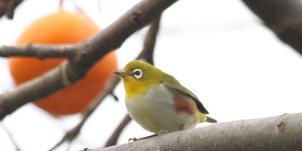 jp-bird-121