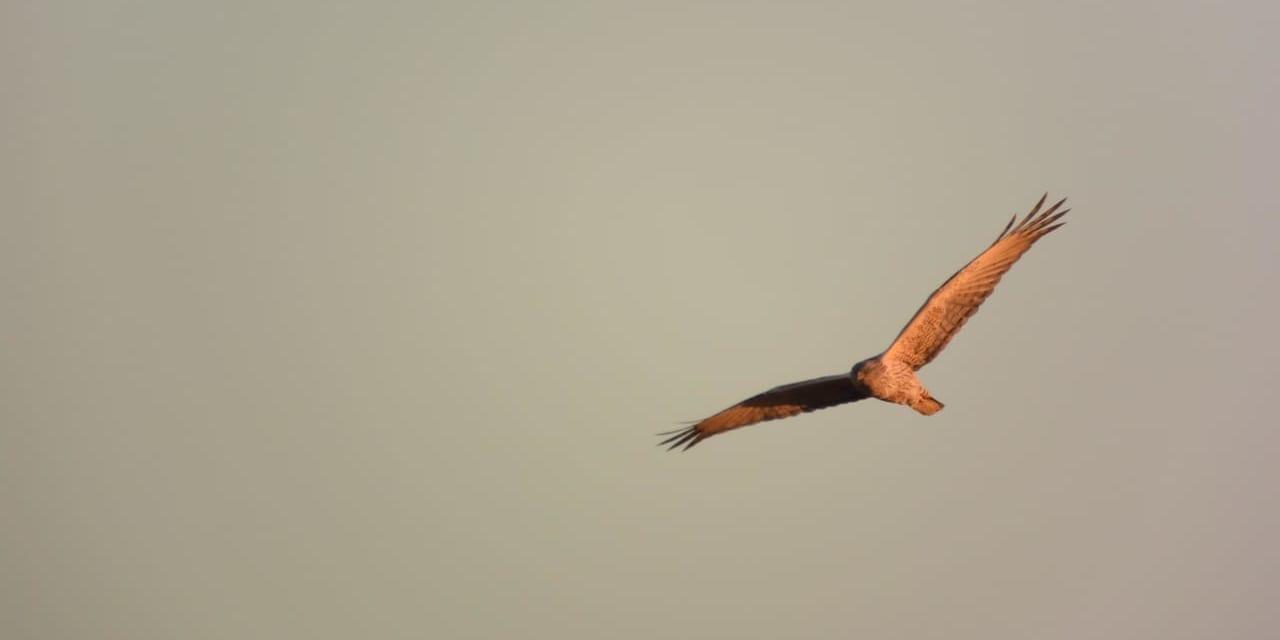 jp-bird-212