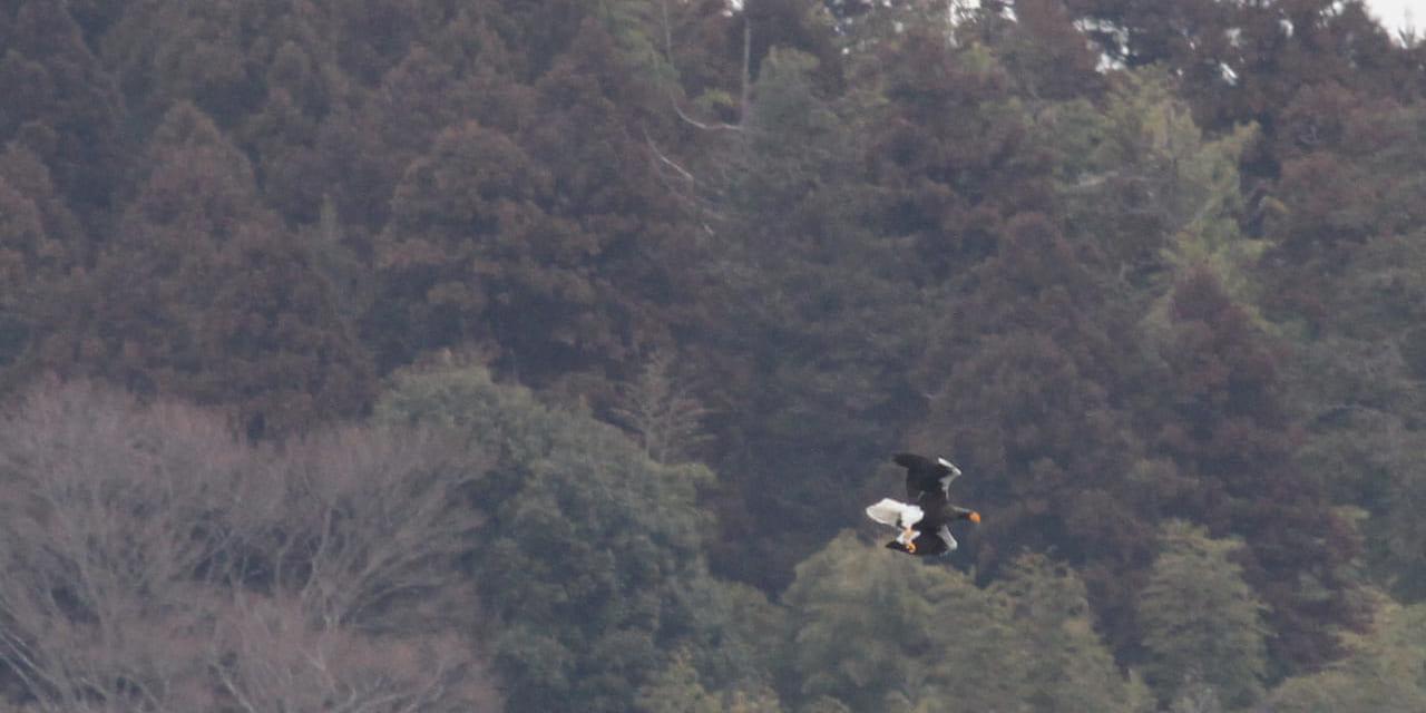 jp-bird-216