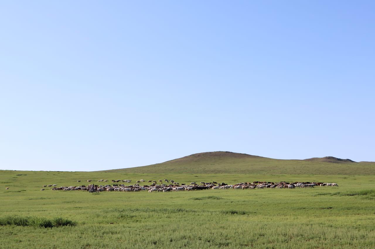 ハーブの香りに包まれながら羊の放牧する遊牧民バイクの姿を追う朝
