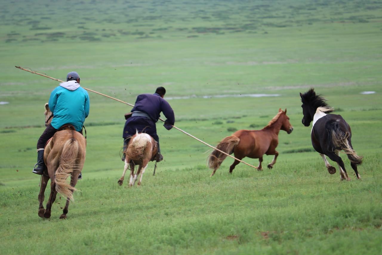 オールガ(竿)を片手に馬を追い込むムングーさん