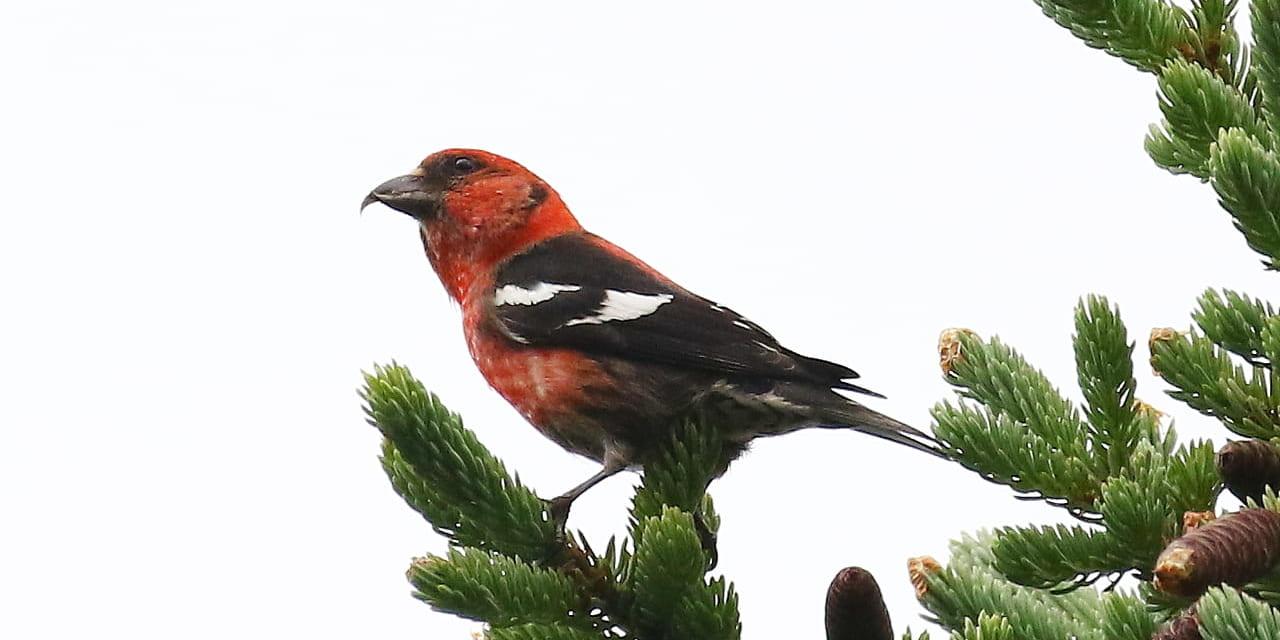 ac-bird-02