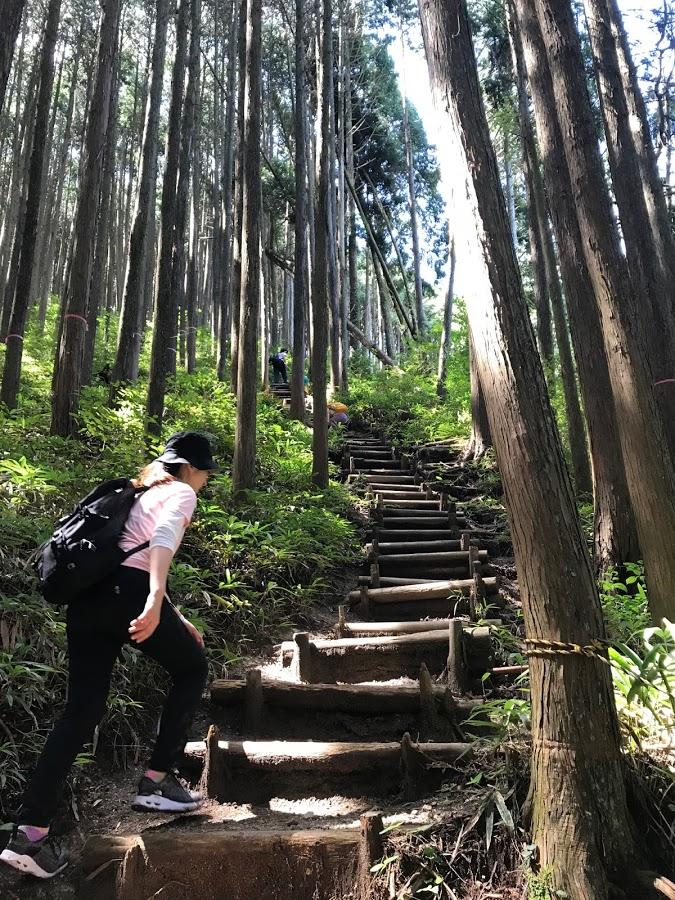 行きは登り道。階段が続きます