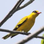 jp-bird-194