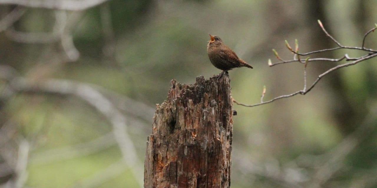 jp-bird-096