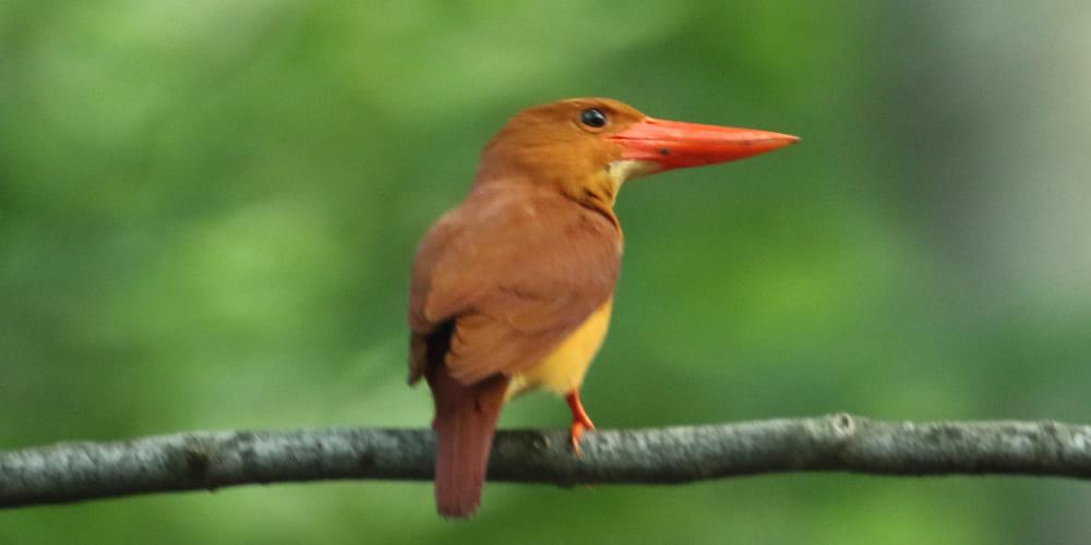 jp-bird-218