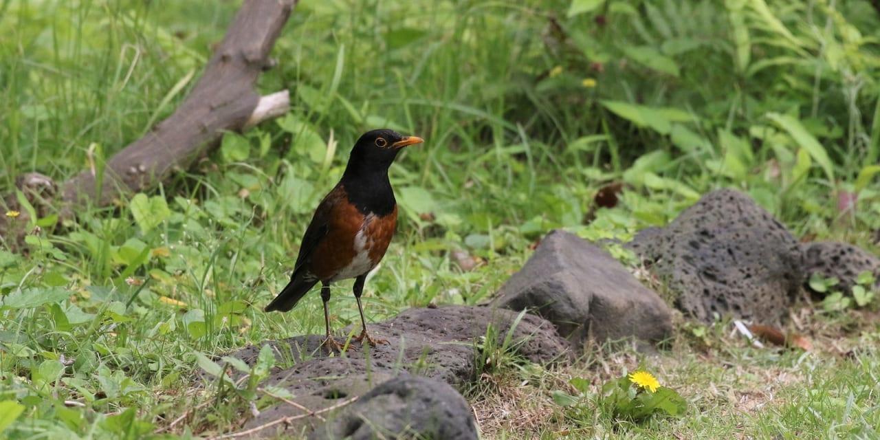 jp-bird-101