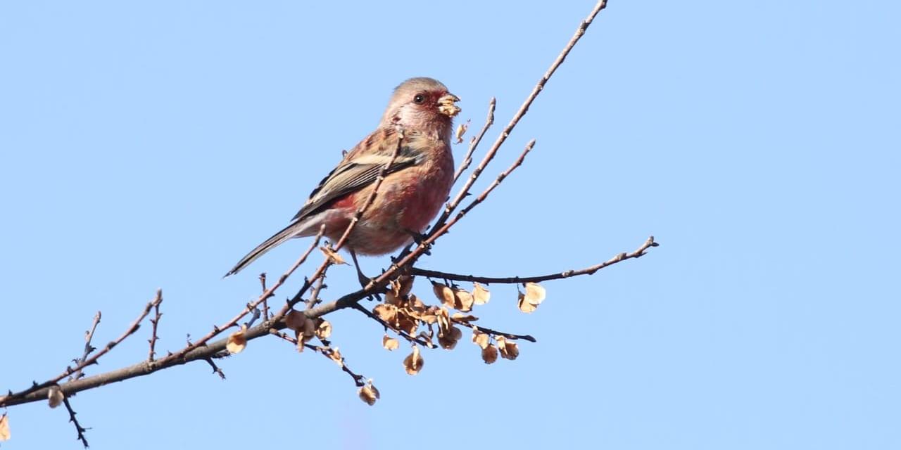 bird-k-20200216