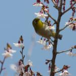 jp-bird-095
