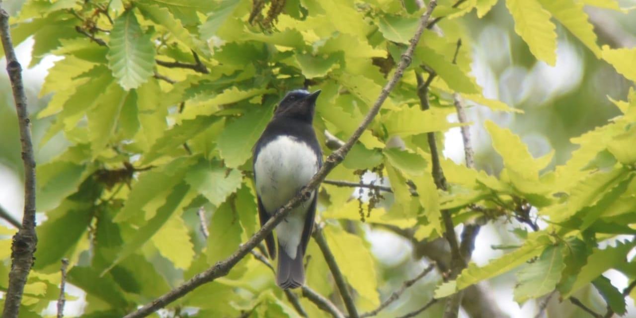 jp-bird-147