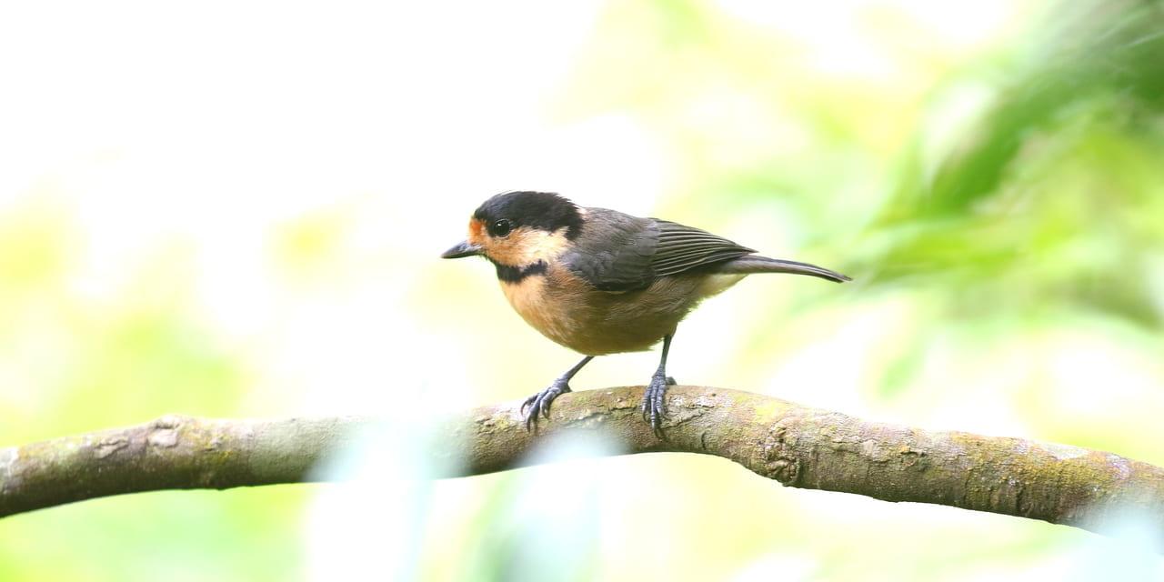 jp-bird-219