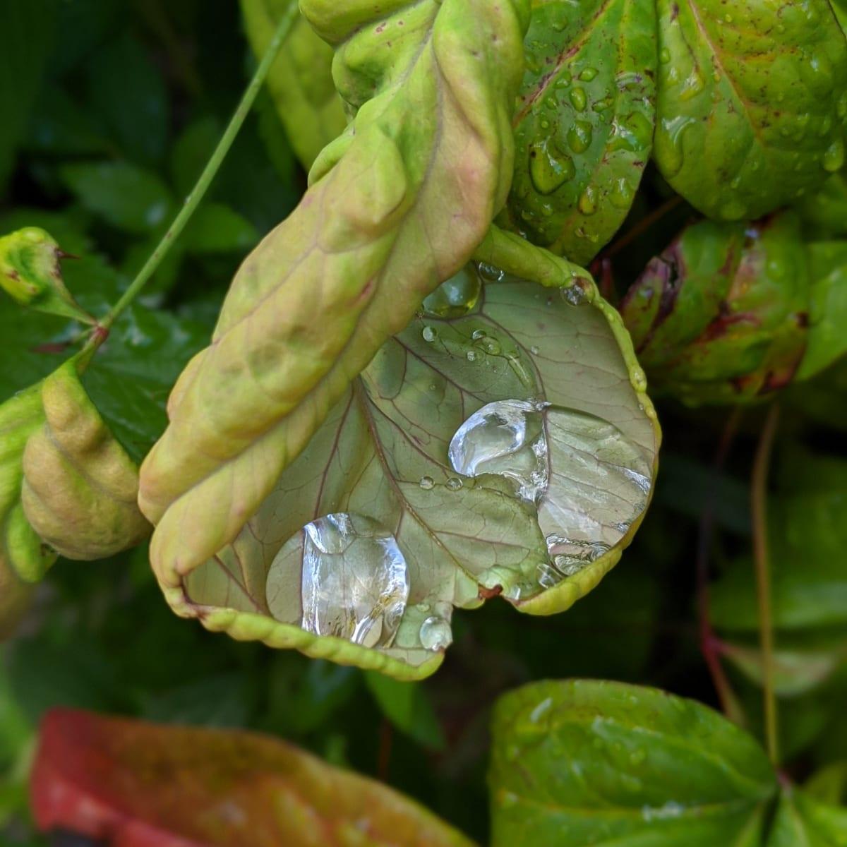 葉っぱの裏の宝石