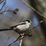 bird-k-20201121