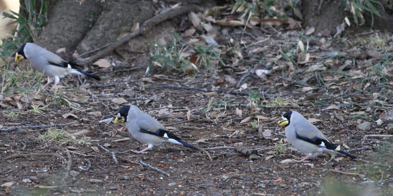 bird-k-20201219