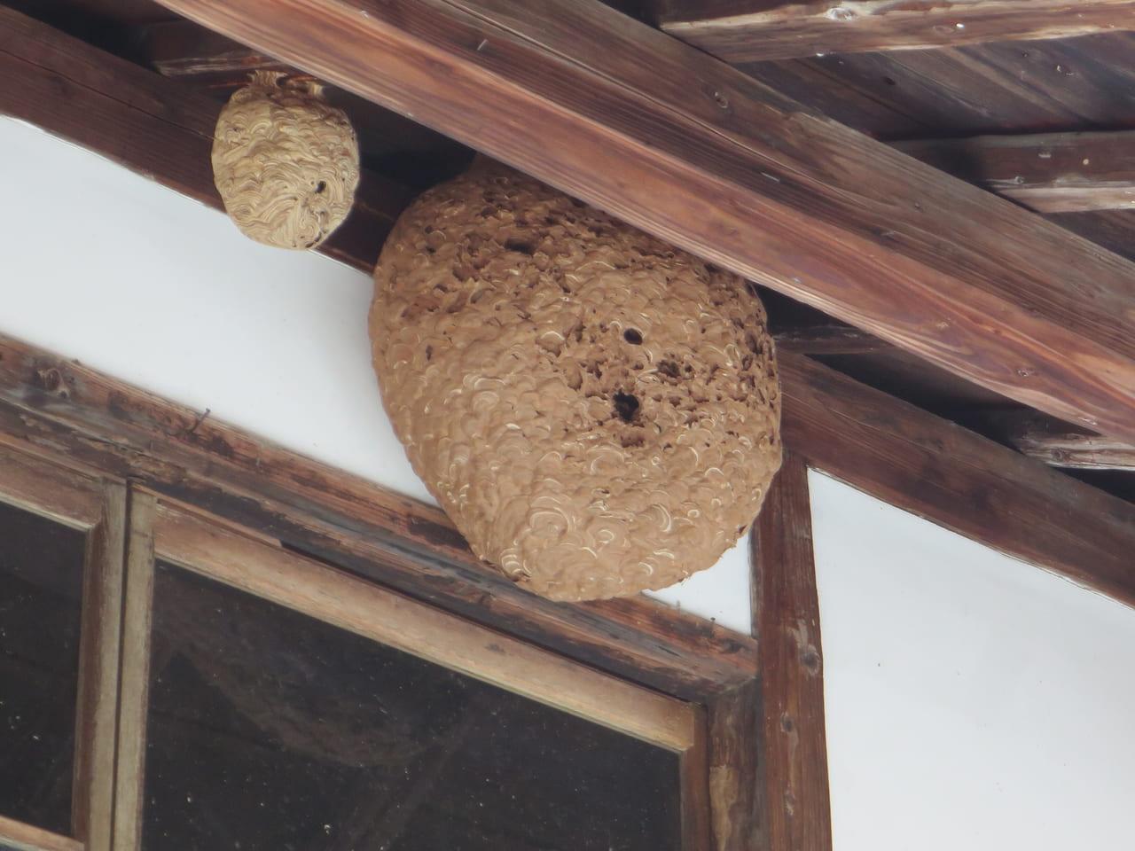 古いスズメバチの巣