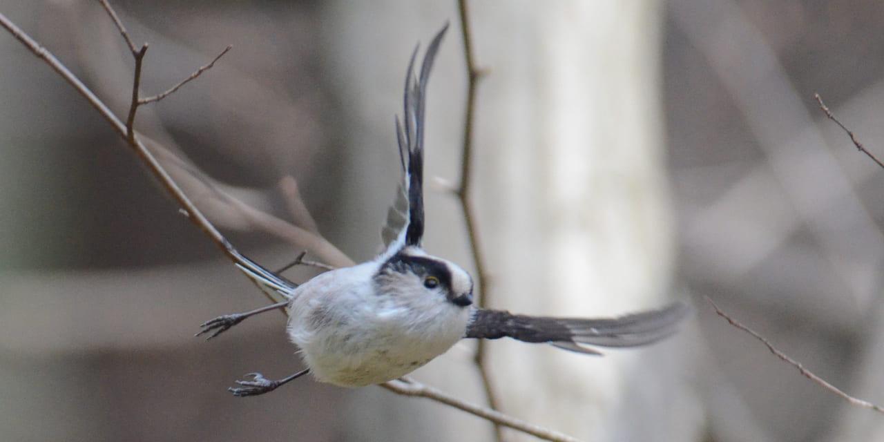 bird-k-20210404