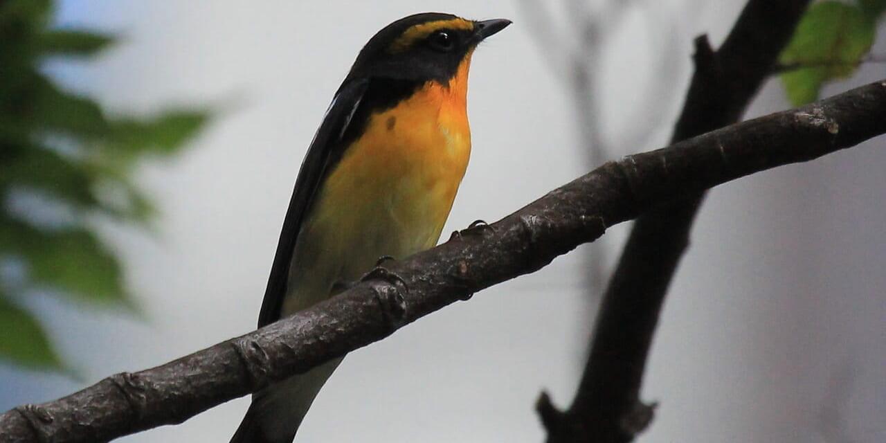 bird-k-20210424