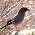 jp-bird-223