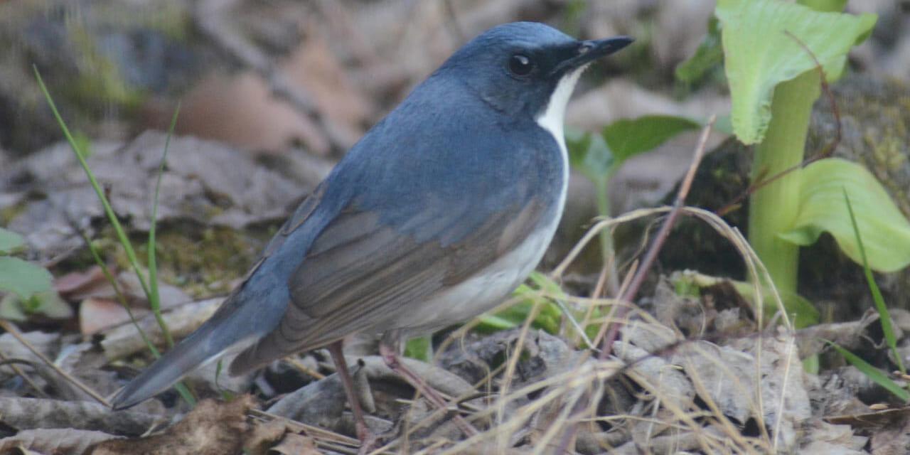 jp-bird-225