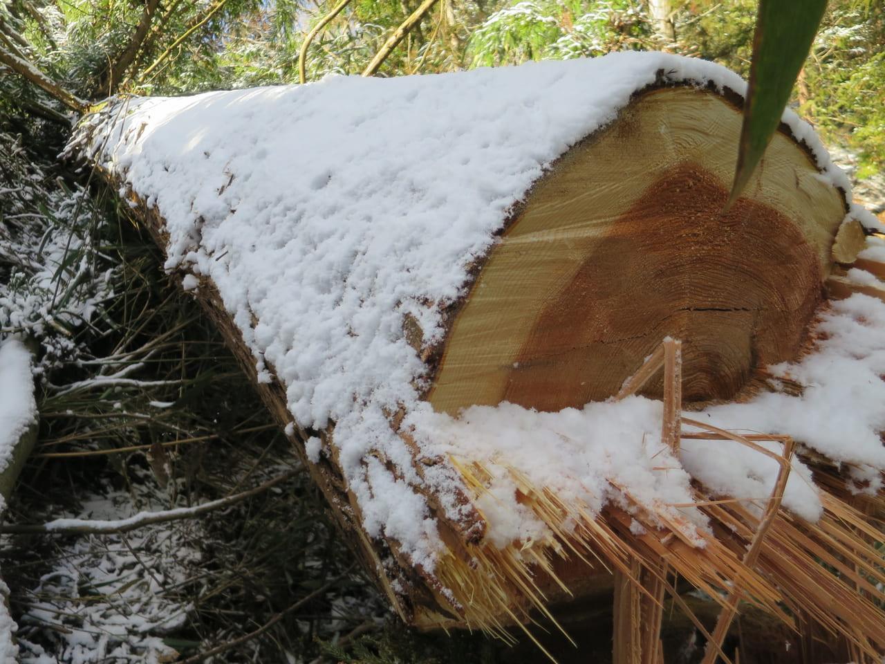 新月伐採した木
