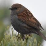 jp-bird-231