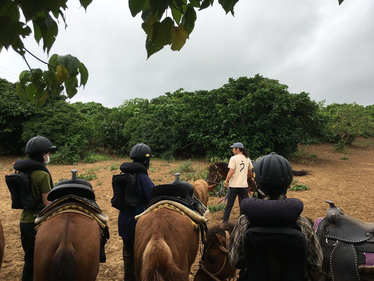 う牧場で乗馬レッスン